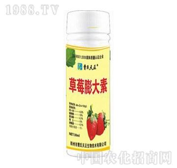 曹氏天正-草莓膨大素