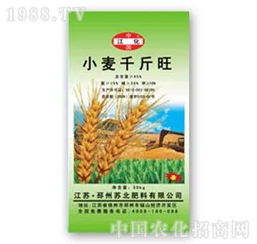 苏北-小麦千斤旺