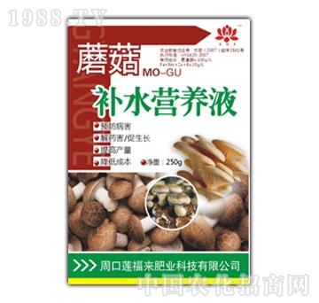莲福来-蘑菇补水营养液