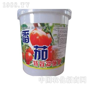 五星-番茄�S�_施肥
