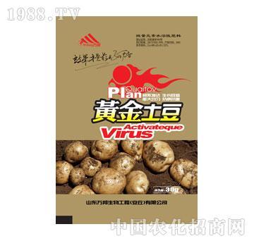 万邦-黄金土豆