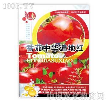 罗纳朗克-番茄中华遍地