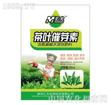 汇尤-茶叶催芽