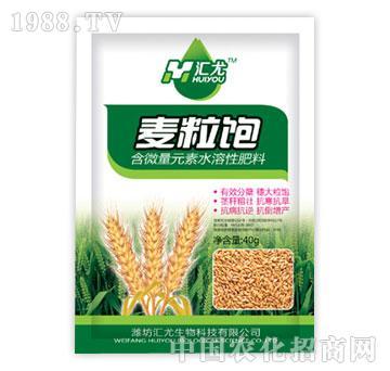 汇尤-麦粒饱