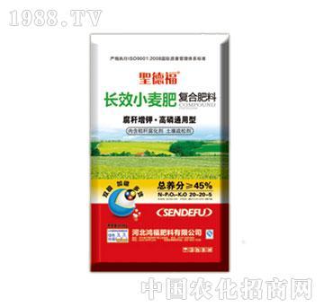 鸿福-圣德福长效小麦复