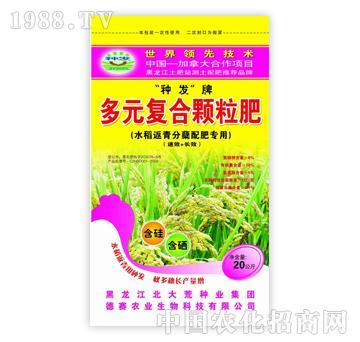 种发-水稻返青分蘖肥