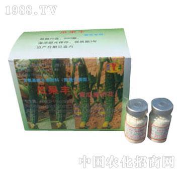 瓜果丰-黄瓜摘带花