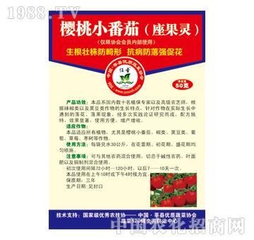 樱桃小番茄座果灵