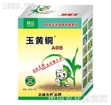 玉黄铜A+B高效玉米田