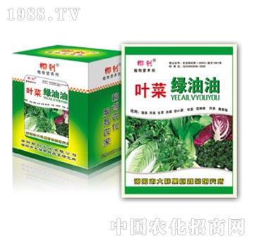 叶菜绿油油