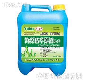 叶咖海藻精华原液