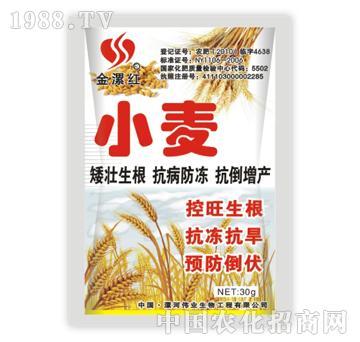 金漯红小麦30g