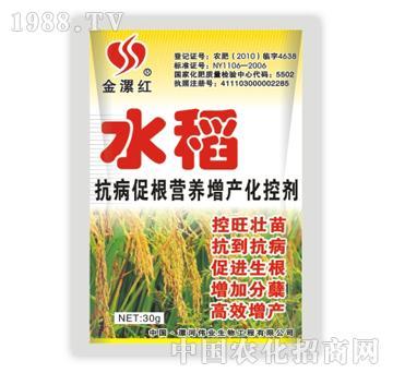 金漯红水稻30g