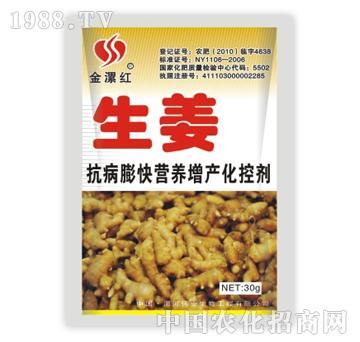金漯红生姜30g
