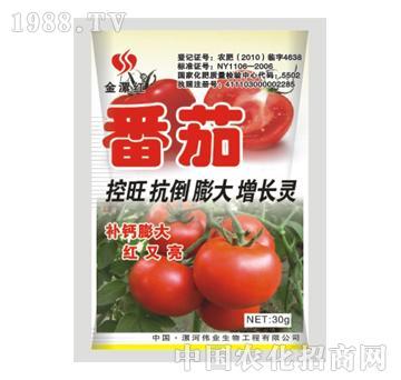 金漯红番茄30g