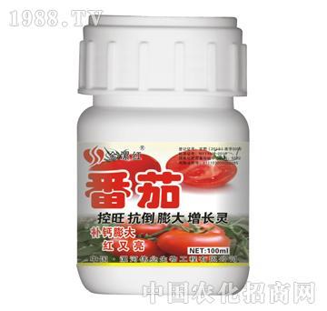 金漯红番茄