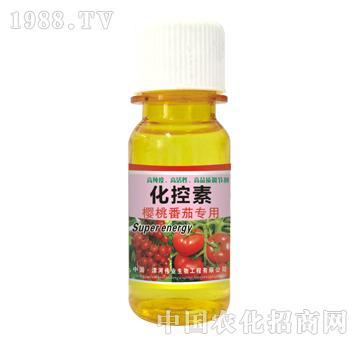 化控素樱桃番茄专用