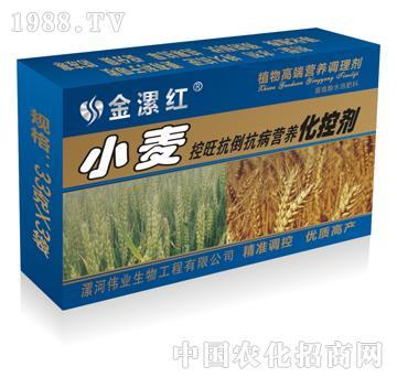 小麦控旺抗倒抗病营养化