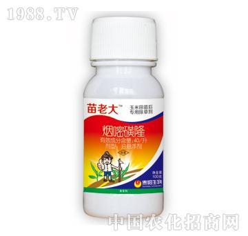 40/升烟嘧磺隆-苗老大-泰阳