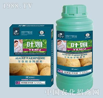 冬氨酸藻姆菌素-土豆专