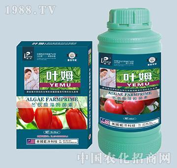 冬氨酸藻姆菌素-番茄专