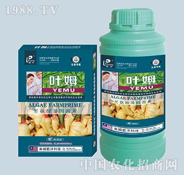 冬氨酸藻姆菌素-生姜专
