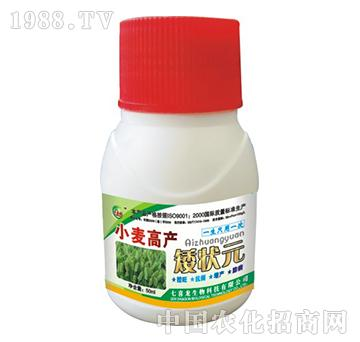 小麦高产矮状元-七喜龙