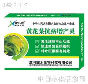 黄花菜抗病增产灵-漯康壮