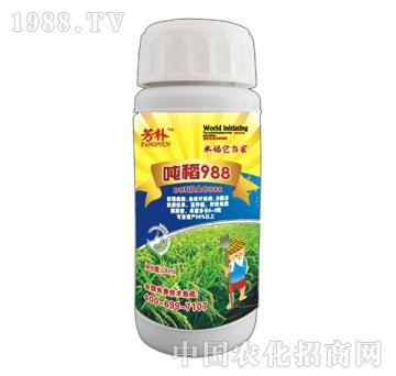 吨稻988-芳朴-标驰