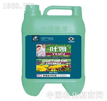 冬氨酸藻姆菌素-花卉根