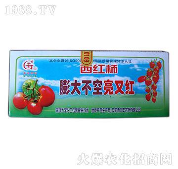西红柿膨大不空亮又红-