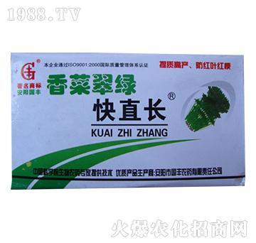 香菜翠绿快直长-国丰