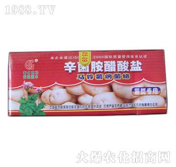 马铃薯病菌绝-国丰