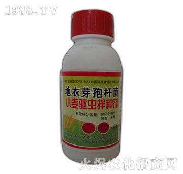 地衣芽孢杆菌-小麦驱虫拌种剂-国丰