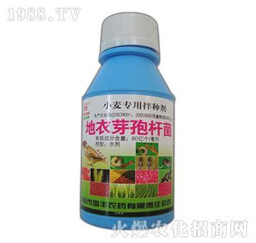 地衣芽孢杆菌-小麦专用拌种剂-国丰