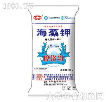 海藻钾-中鲁大化