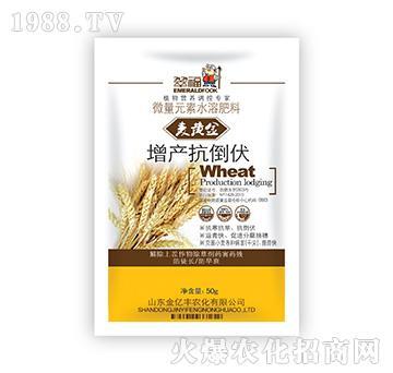 麦黄金增产抗倒伏-金亿