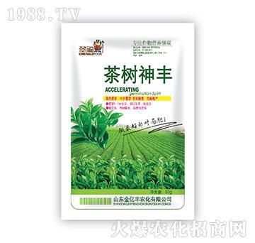 茶树神丰-金亿丰