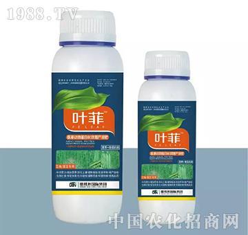 豆角菜豆专用叶面肥(瓶