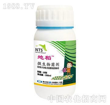 澳大利亚NTS-地稻-