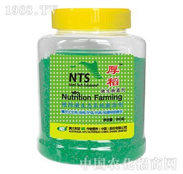 澳大利亚NTS-厚稻-