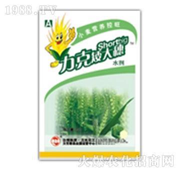 小麦营养控旺-矮大穗-