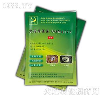 大孢绿僵菌CQMa117-归燕牌-重大生物