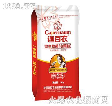 微生物菌剂-迦百农