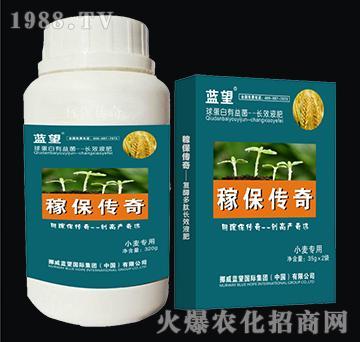 小麦专用球蛋白有益菌-
