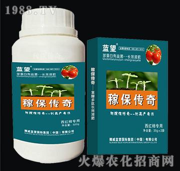 西红柿专用球蛋白有益菌