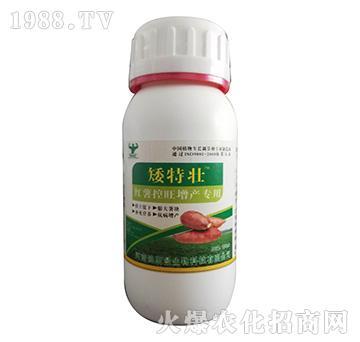 红薯控旺增产专用-矮特