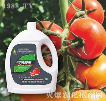 番茄专用氨基松脂菌露母