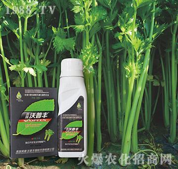 芹菜专用氨基松脂菌露母
