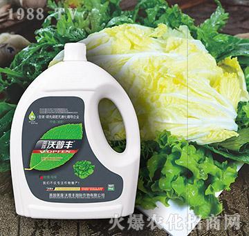 叶菜专用氨基松脂菌露母